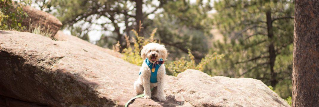 Best Dog Hiking Gear Under $15 - Lisa Gallegos - DIY Dog